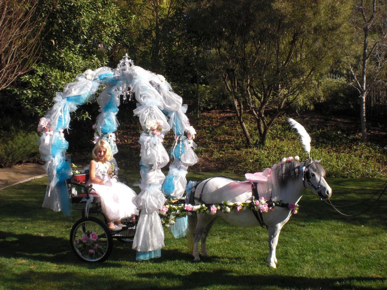 Miniature Horse Cart & Carriage Rides